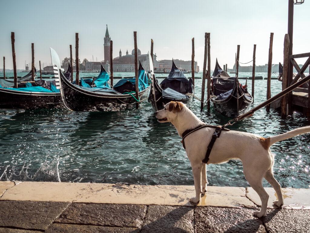 Decci v Benátkách